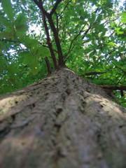 arbre-debout.jpg